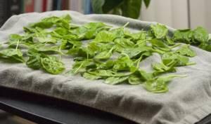 Как сушить петрушку в домашних условиях – делимся опытом