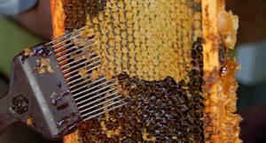 Пчелиный забрус: все о пользе и свойствах этого продукта