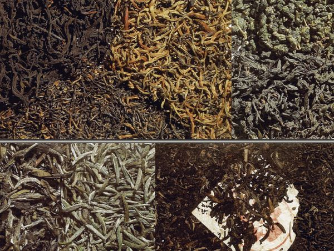 Ферментация чая – удивительный химический процесс