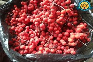 Черноплодная рябина: полезные свойства, где растет и от чего помогает арония, применение листьев и ягод