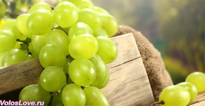 Масло виноградных косточек для волос – советы по применению и рецепты