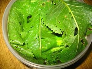 Лечение артроза коленного сустава листьями хрена: инструкция