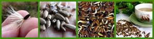 cемена расторопши – лечебные свойства и противопоказания, как правильно принимать препарат и где его купить