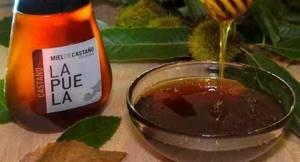 Каштановый мед: многогранность целебного эффекта