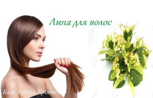 Липа для волос: ополаскивание, маски, окрашивание