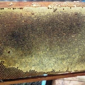 Горчичный мед: самое вкусное лекарство