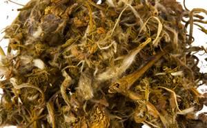 Сон-трава: лечебные свойства и рецепты применения