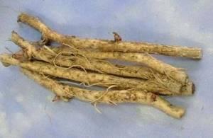 Настойка аралии: эликсир жизненных сил