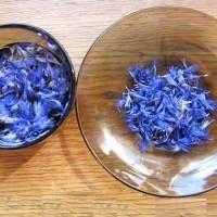 Василек синий: лечебные свойства, показания и способы применения