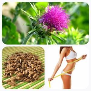 Шрот расторопши: что это такое, какими полезными свойствами и противопоказаниями обладает, как принимать для похудения