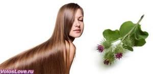 Лопух для волос: как приготовить и правильно использовать, применение отвара листьев и сока от выпадения