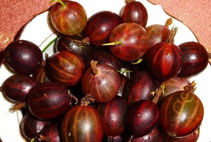 Красный крыжовник: полезные свойства и рецепты