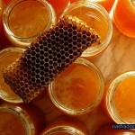 Настойка полыни – безопасное природное средство