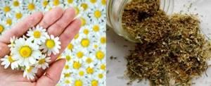 Желчегонный чай: что это, как принимать и какие травы содержит