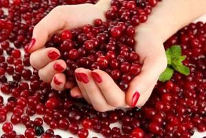 Клюква садовая – выращиваем ягоду дома для здоровья и красоты