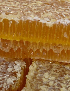 Пчелиный воск – все о натуральном продукте пчеловодства