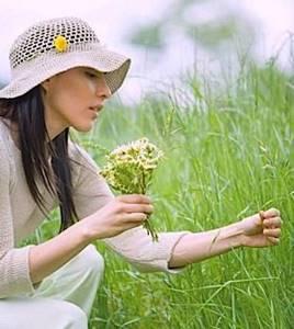 Настойка лапчатки белой: избавляемся от проблем со щитовидкой, есть ли противопоказания