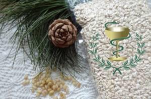 Жмых кедрового ореха: применение и полезные свойства, что полезного можно из него сделать