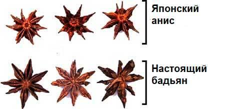 Бадьян: что это такое, полезные свойства и противопоказания, в чем разница между ним и анисом