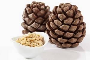 Скорлупа кедрового ореха: применение шелухи в народной медицине, лечебные свойства и противопоказания