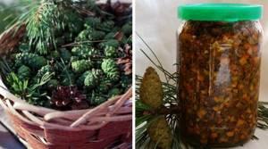 Настойка из кедровых шишек – правила приготовления и показания к применению