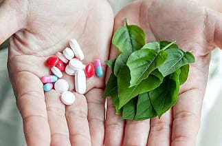 Шалфей: лечебные свойства для женщин, какие есть противопоказания для его приема, можно ли при беременности