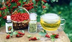 Боярышник: полезные свойства и рецепты народных целителей