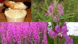 Кипрейный мед – малоизвестный целитель