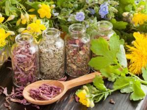 Травы от стресса – 10 растений для успокоения нервной системы