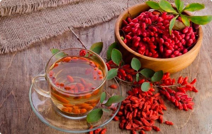 Барбарис обыкновенный – лекарственные сборы и полезные сладости