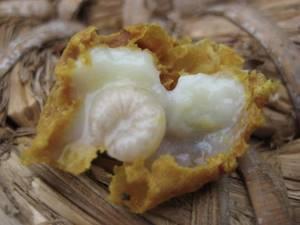 Маточное пчелиное молочко: польза королевского продукта