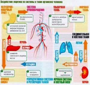 Лецитин: в каких продуктах содержится в большом количестве, из чего получают добавку искусственным путем