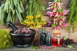 Мята мочегонная или нет — диуретические свойства растения