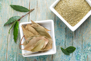 Отвар лаврового листа: применение и рецепты