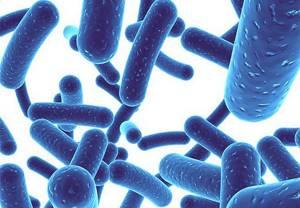Пробиотики при запорах: правильный выбор лекарственного средства