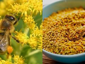 Пчелиная пыльца: полезные свойства уникального продукта пчеловодства