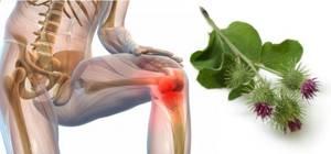 Лопух от суставов: способ применения – настойки, компрессы и многое другое, какой стороной прикладывать растение к больному месту