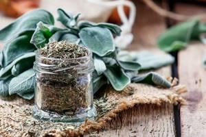 Можно ли пить шалфей как чай —польза лекарственного растения