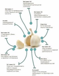 Чеснок от глистов – препараты домашнего приготовления