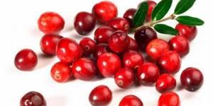 Клюква — полезные свойства и противопоказания целебной ягоды