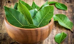 Лавровый лист: какими лечебными свойствами он обладает?