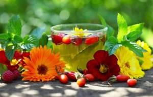 Печеночный чай – помощник в борьбе за здоровую печень