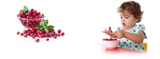 Клюква: калорийность и правила использования в рационе