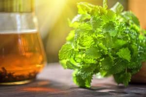 Мята и мелисса — отличия лекарственных растений