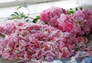 Чай из лепестков роз – эликсир хорошего настроения и крепкого здоровья