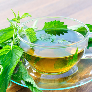 Крапива – лечебные свойства и противопоказания жгучего растения